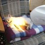 Досвід застосування приладу БІОПТРОН у ветеринарії